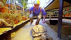 The Tortoise Song by Blippi
